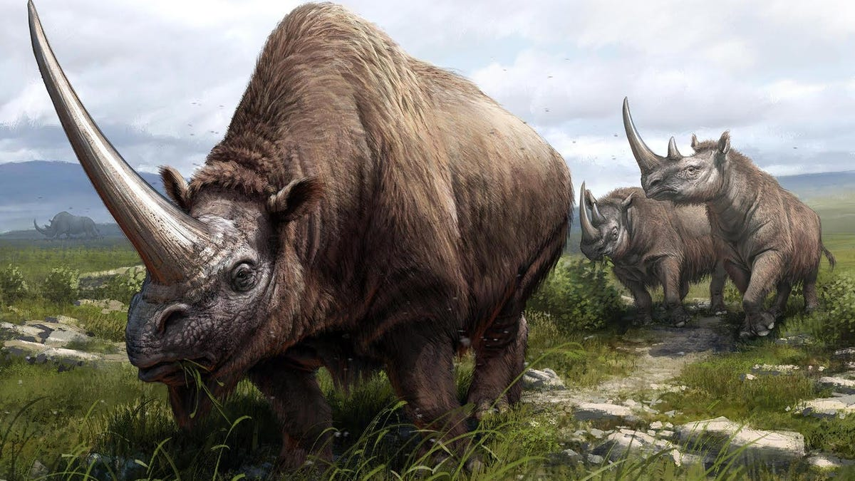 Ancient History of Rhinos, Including Woolly Ancestors, Revealed in DNA Study thumbnail