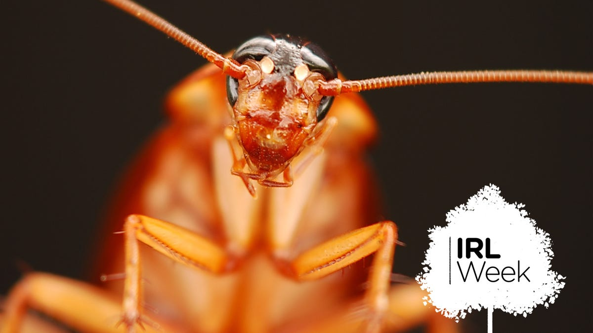 How to Kill Cockroaches, According to Science