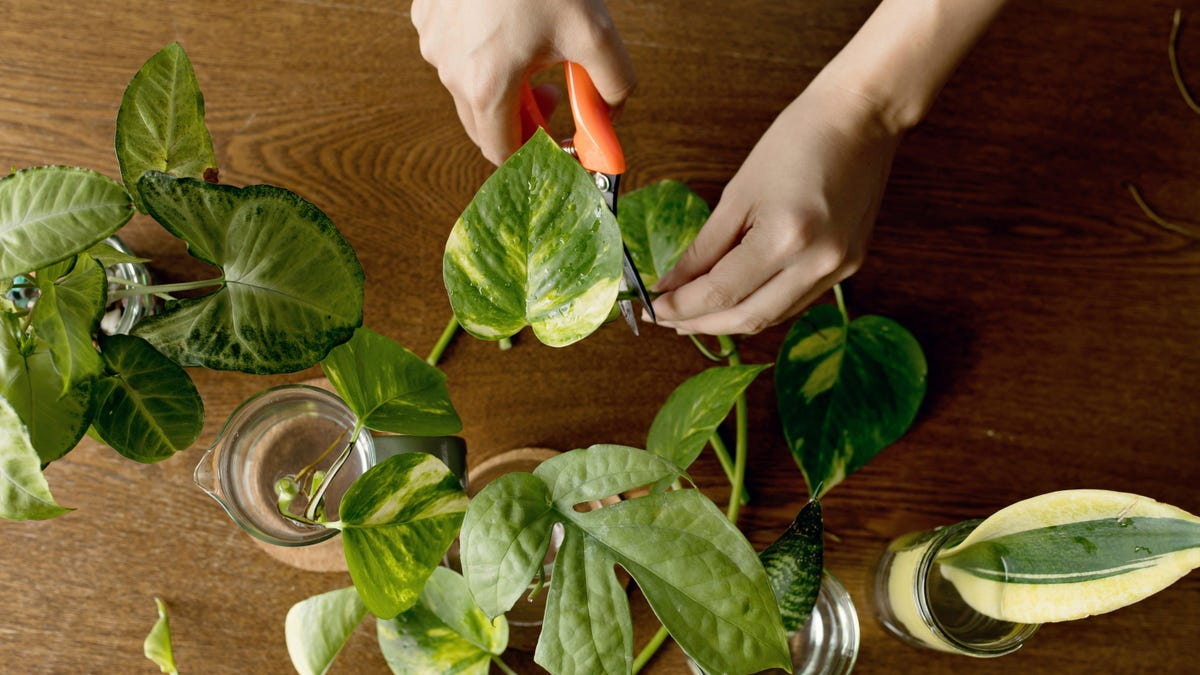 How to Make Money Selling Cuttings of Your Houseplants