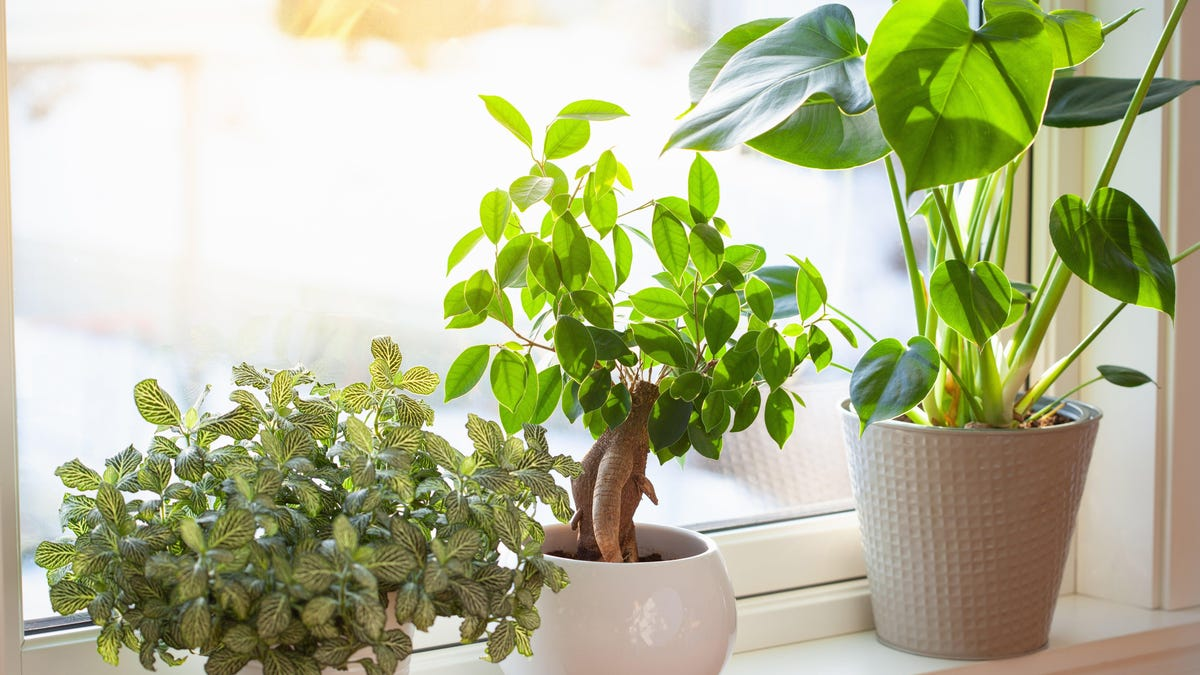 These Indoor Plants Love Direct Sunlight