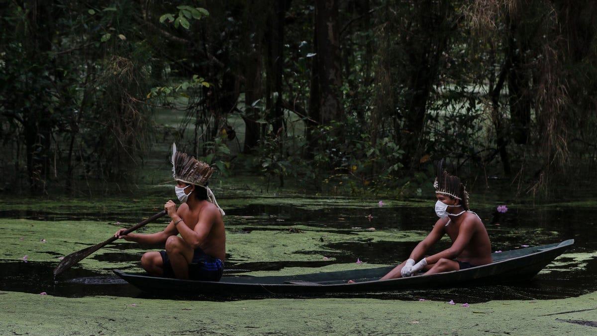 'A New Pandemic': Coronavirus Threatens Indigenous People in the Amazon as Fire Season Nears