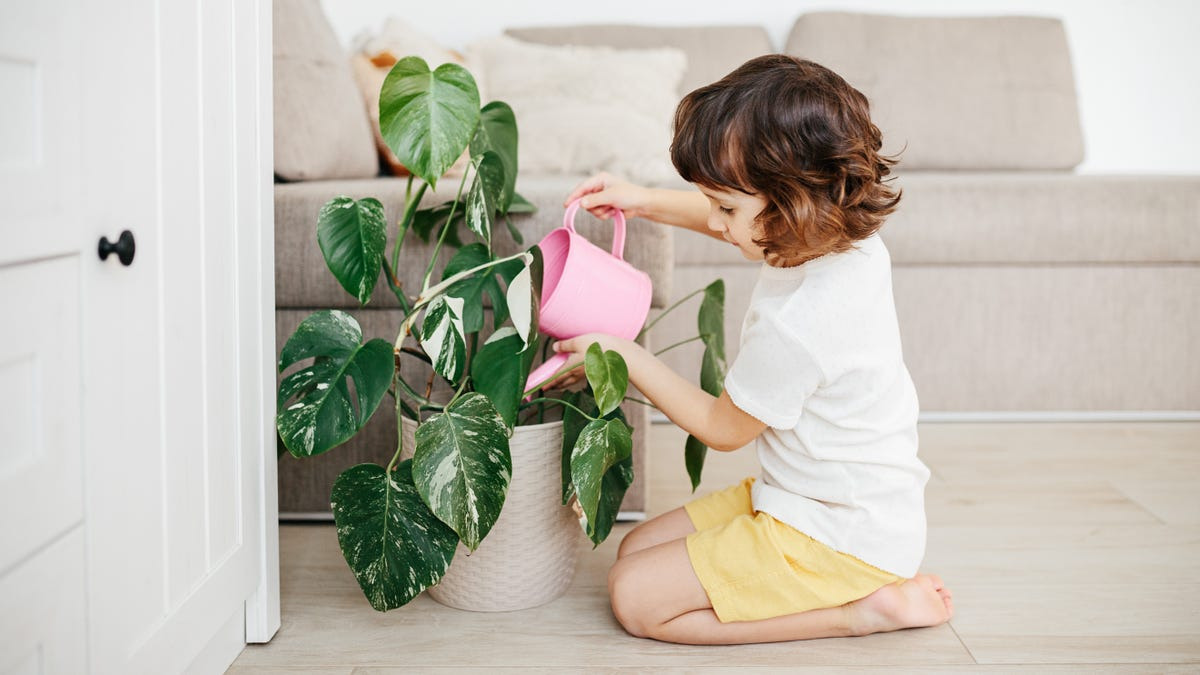 Why Your Kid Needs a Plant