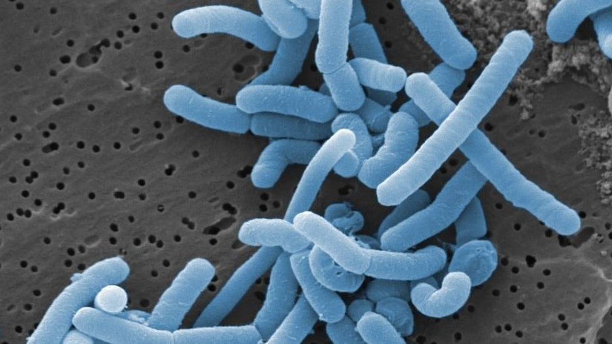 Study Maps the Hundreds of Bacteria That Live in the Human Vagina - Gizmodo