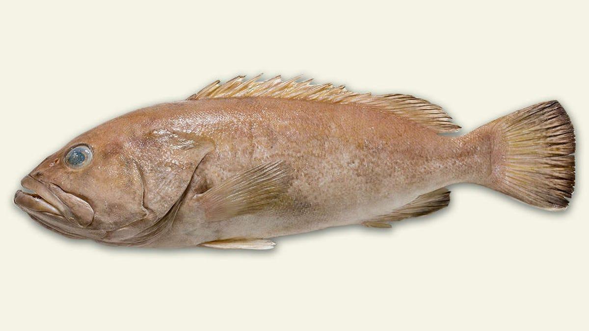 Los australianos han estado comiendo durante años un pescado desconocido para la ciencia