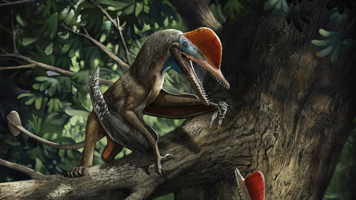 Paleontologists Describe 'Monkeydactyl,' a Pterosaur With an Opposable Thumb