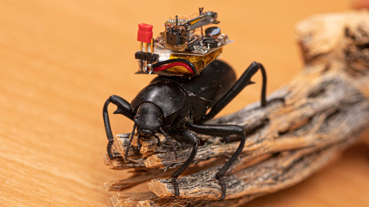 Researchers Created Tiny Camera Backpacks for Beetles