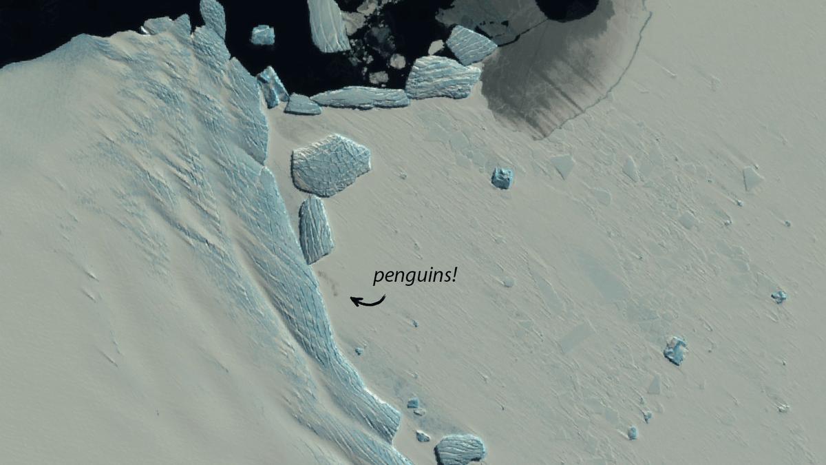 Satellite Images Reveal New Penguin Colonies in Melting Antarctica