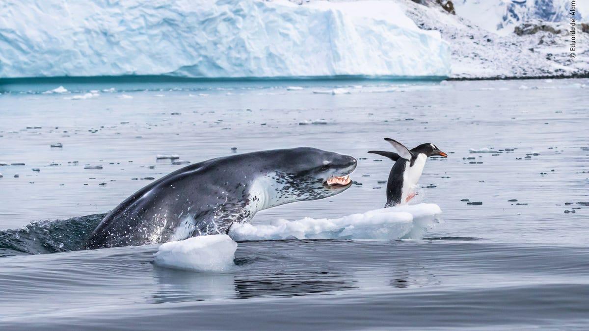 Las mejores fotos de vida salvaje de 2019 revelan la belleza y brutalidad de la naturaleza