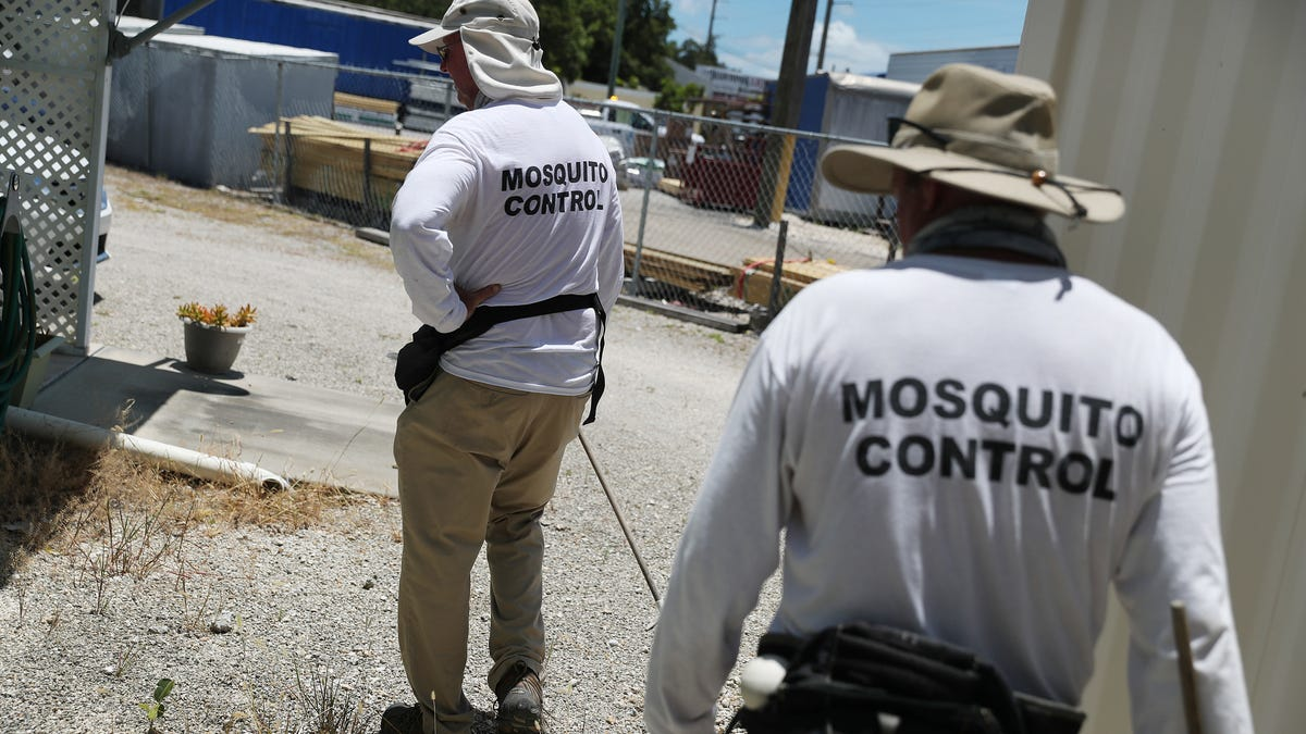Florida Plans to Fix Its Mosquito Problem With 750 Million More Mosquitoes