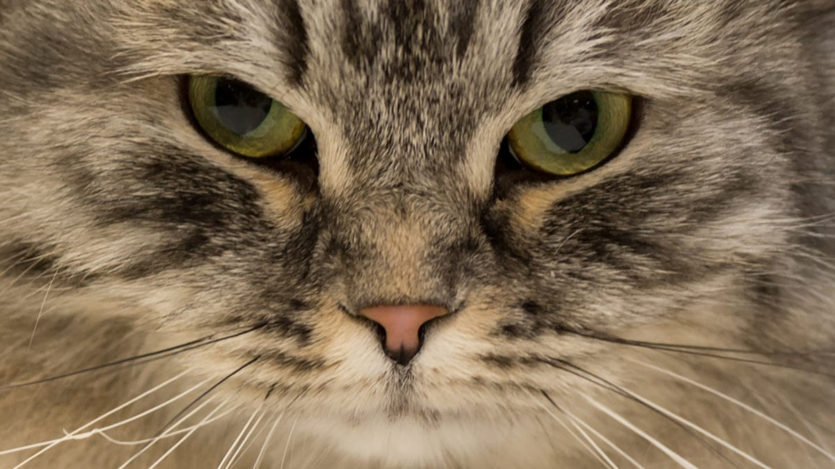 How to Do the 'Cat Smile' and Make Cats Fall in Love With You