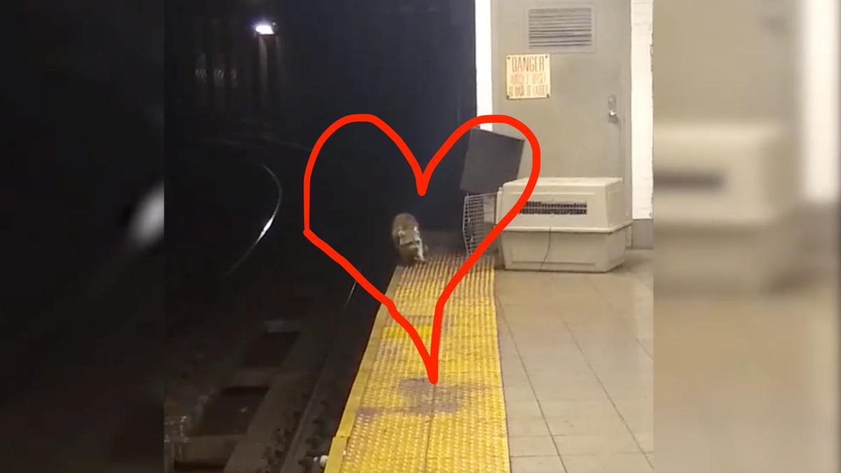 My Winter Crush Is Subway Raccoon