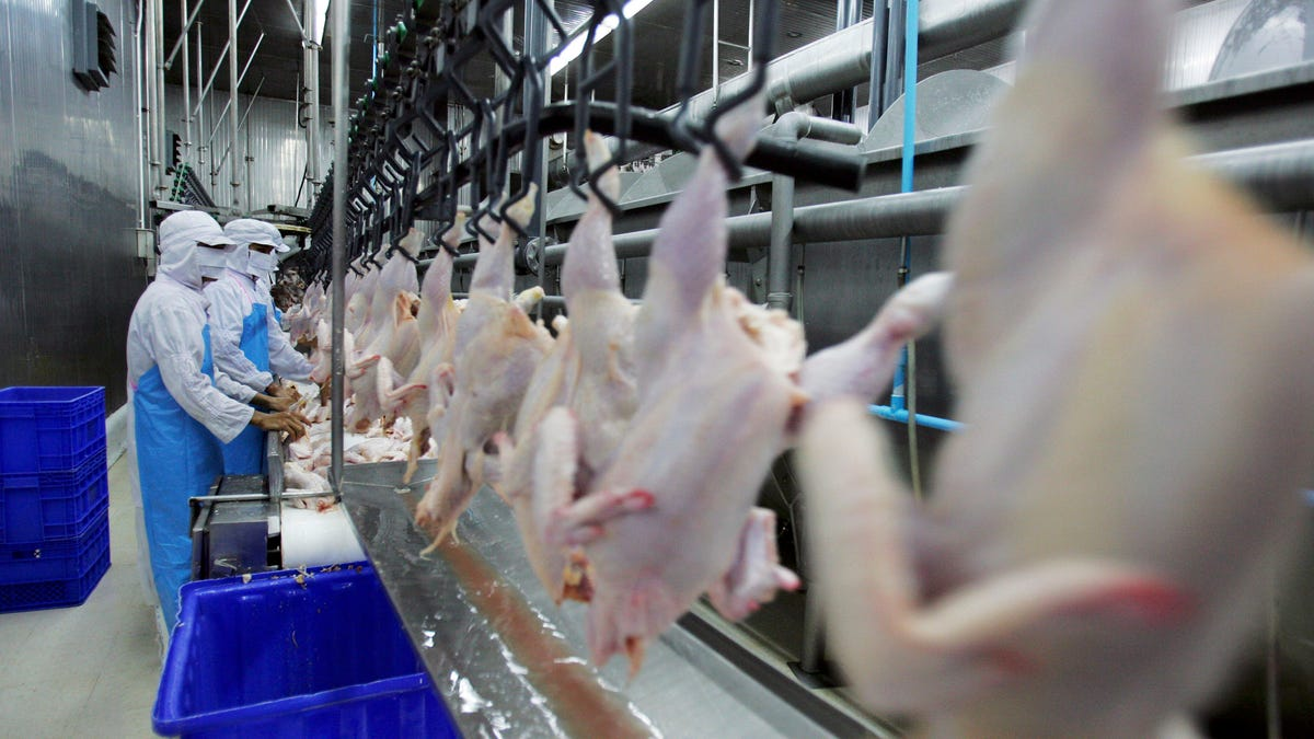Health Department Gives Tyson Plant 'D' Grade After Discovering Raw Chicken Contaminating Nearly Every Surface