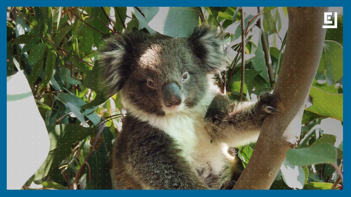 Australia's Wildlife Just Can't Catch a Break