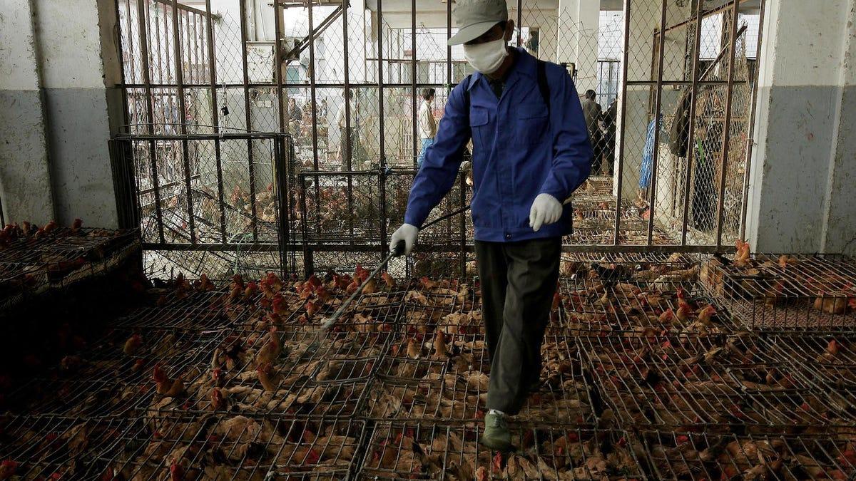 China detecta un caso de peste bubónica y emite una alarma