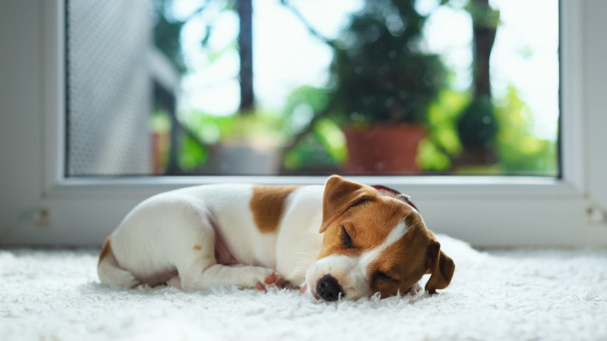 Prepare Your Pet Now for the End of Daylight Saving Time