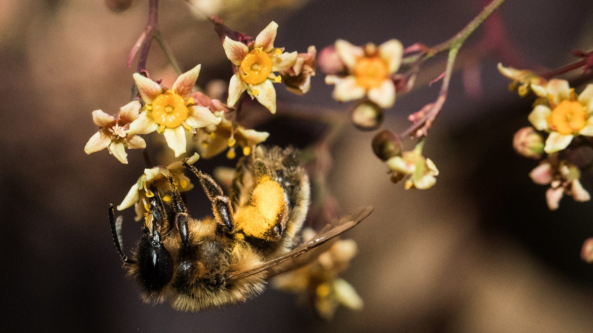 Genius Bees Force Plants to Bloom by Biting Them - Gizmodo