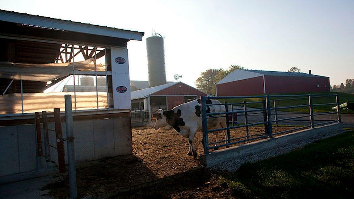 The Coronavirus Outbreak is Making Dairy Farmers Dump Milk, Even as Food Demand Skyrockets - Gizmodo