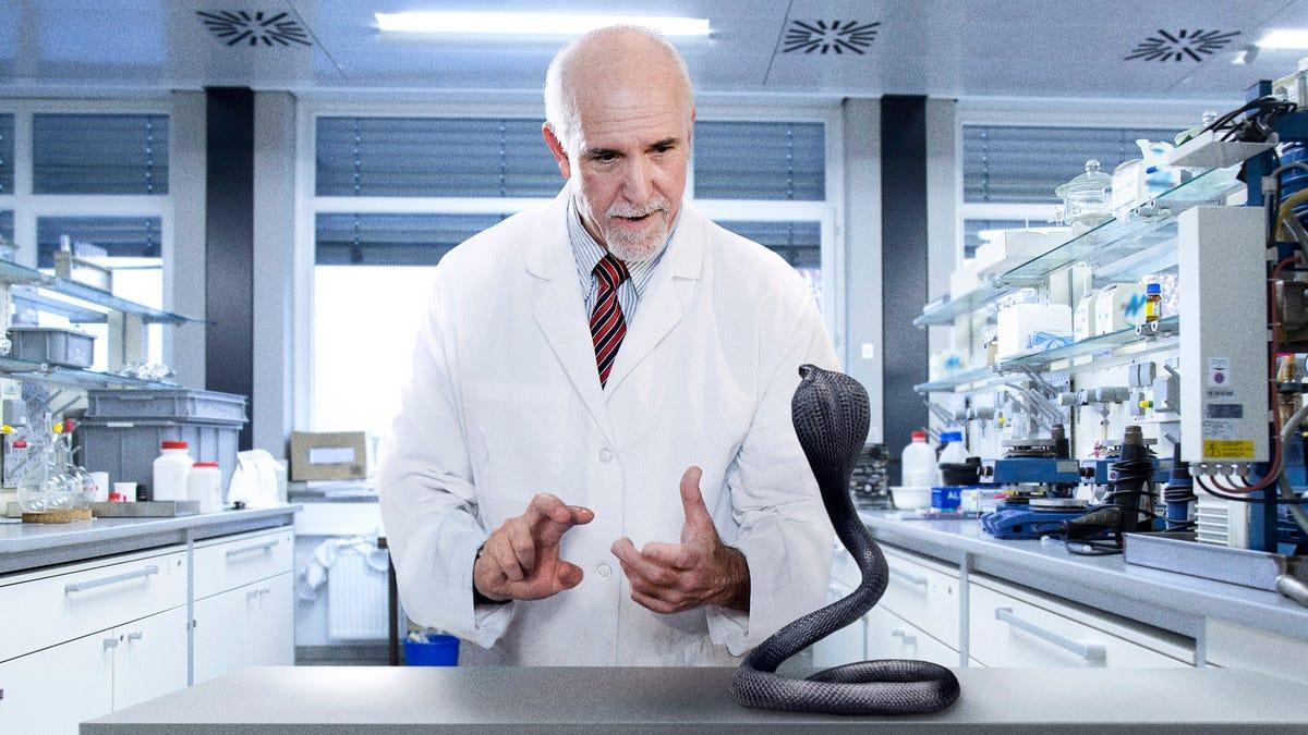 Wissenschaftler Verkünden, Sie Haben Sich Wohl Erfolgreich Beigebracht, Gebärdensprache Zu Schlangen