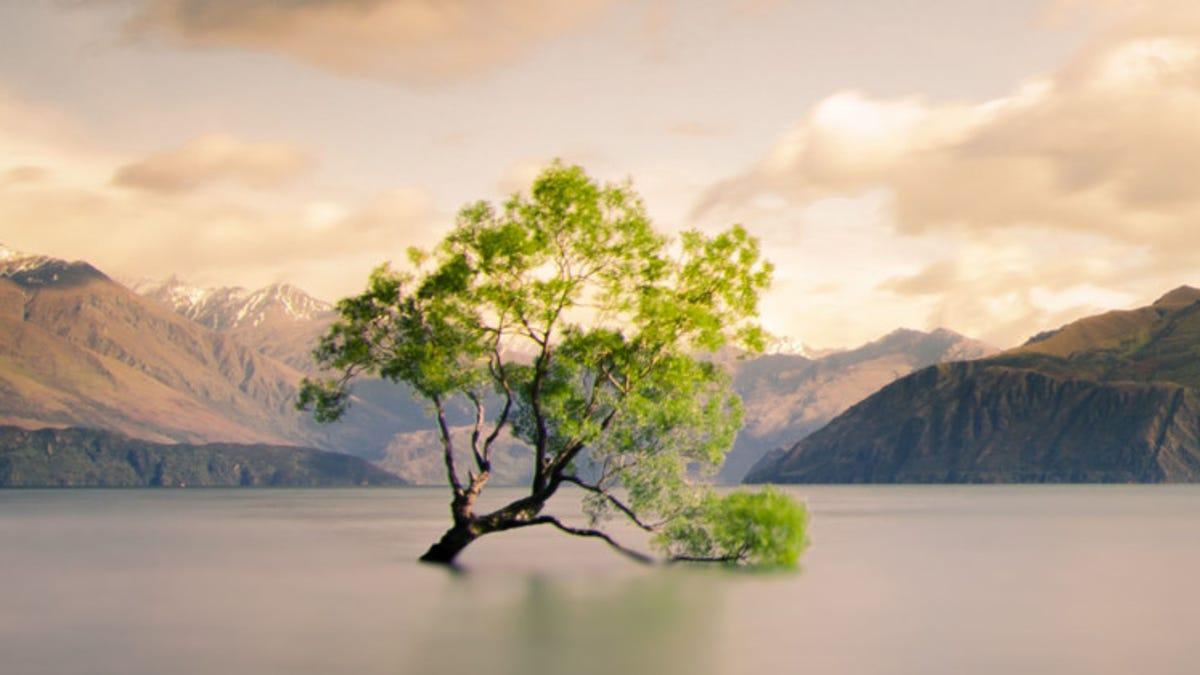 Alguien ha destrozado con una sierra el árbol más fotografiado de Nueva Zelanda
