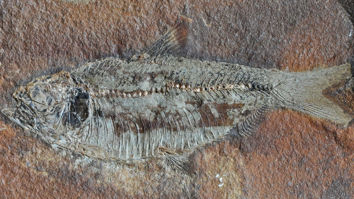 Some Good News About The Worst Mass Extinction In Earth S