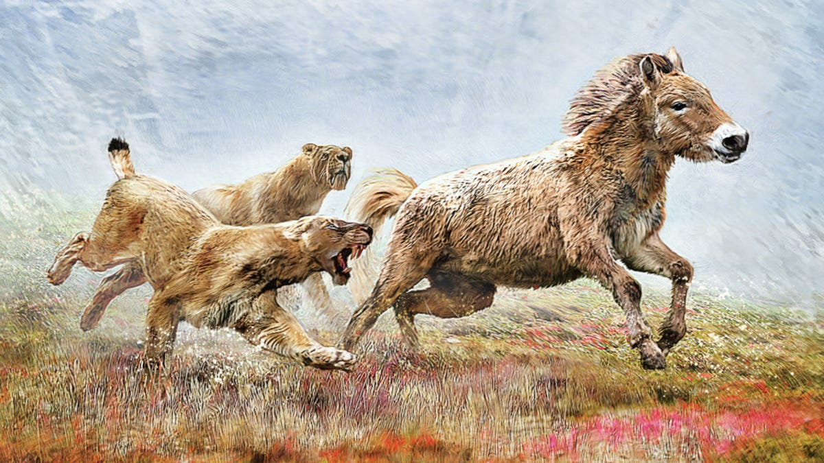 Scimitar-Toothed Cats Hunted Prey to Exhaustion DNA Study Suggests – Gizmodo