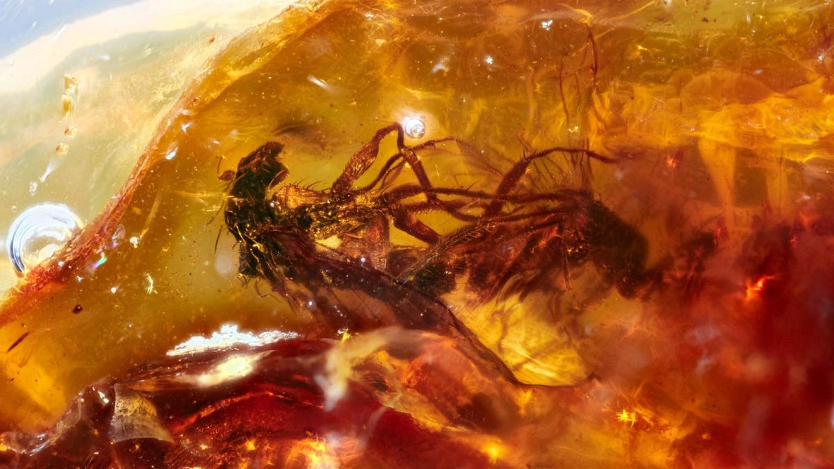 These Flies Have Been Trapped in the Bone Zone for 41 Million Years