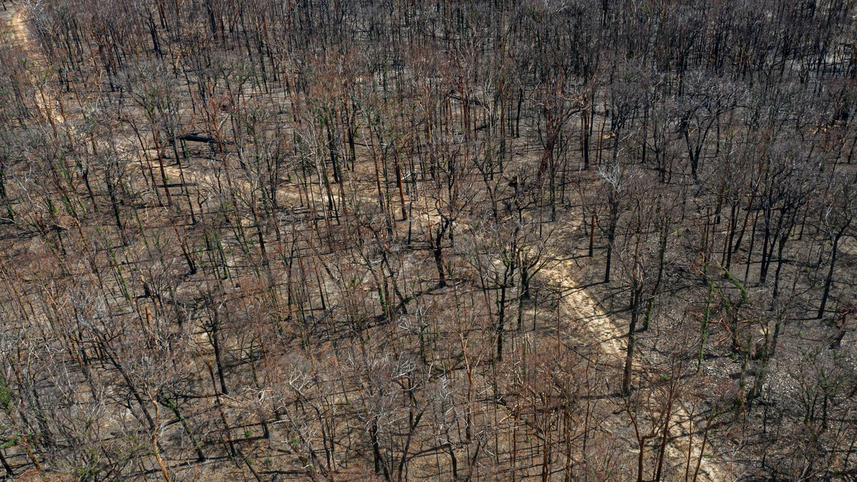 When All the Forests Burn
