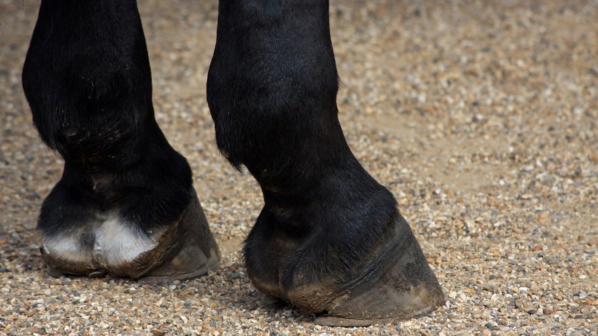 RESOLVED: We Shall Not Emerge From Isolation With Hooves
