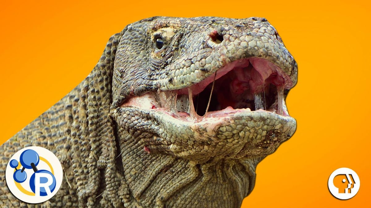 Komodo Dragon Blood Could Save Your Life One Day