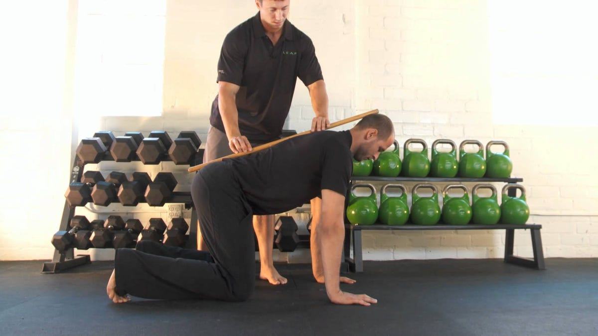 The Bird Dog Is an Abdominal Exercise that Reduces Lower Back Pain