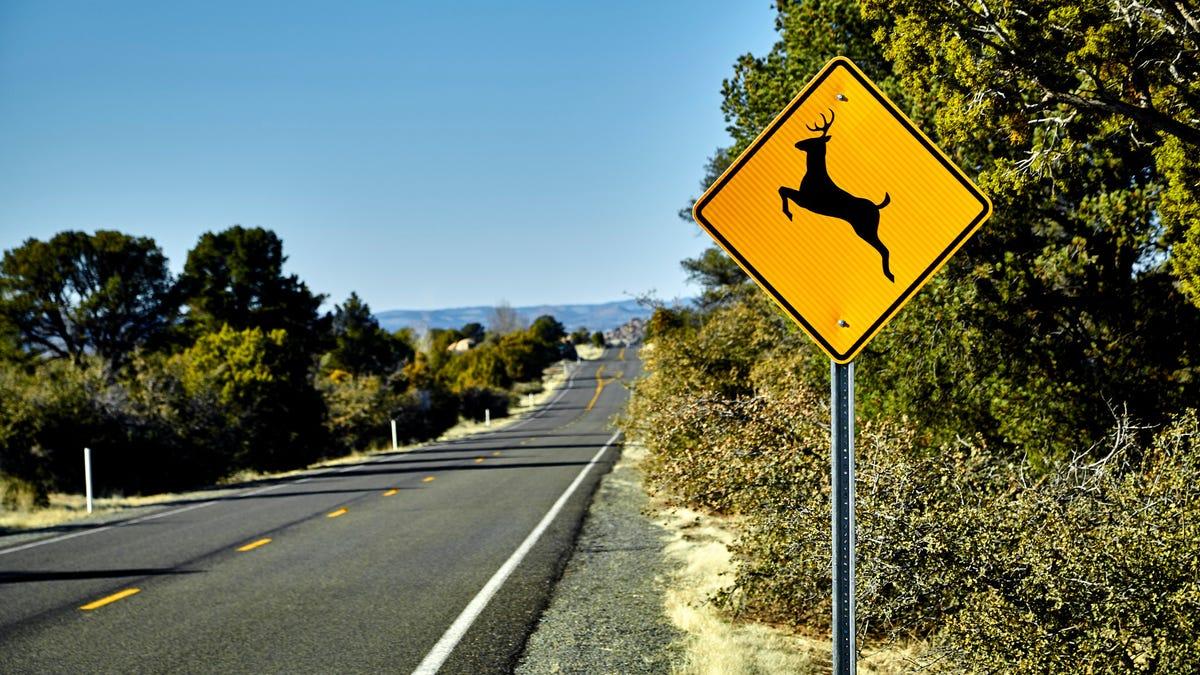 Go ahead, California, enjoy that roadkill