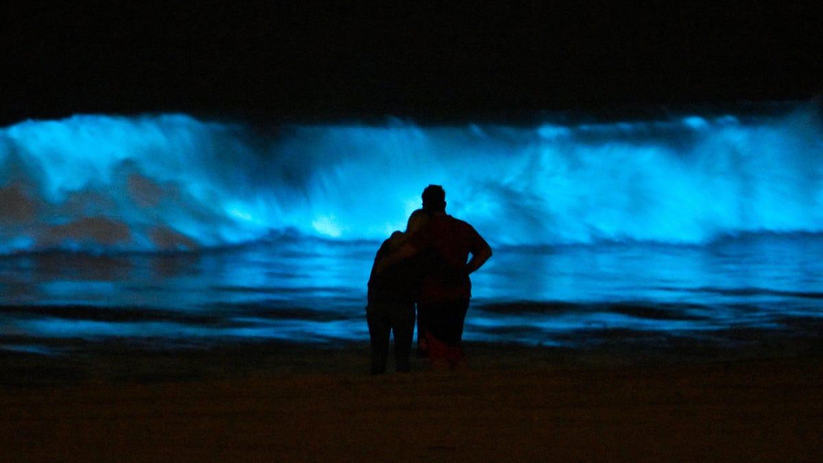 Bioluminescent Waves Draw Crowds to California Beaches