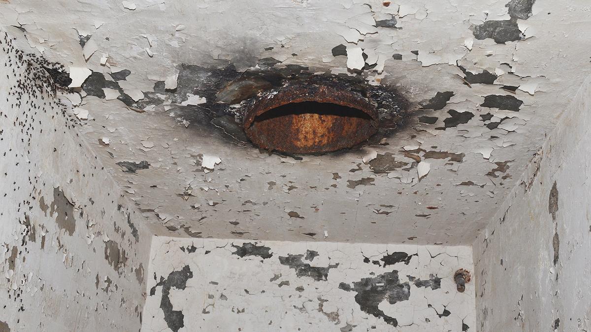 Científicos liberan a las hormigas caníbales que llevaban años atrapadas en un búnker nuclear abandonado