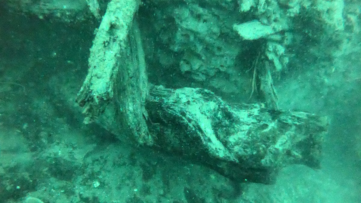 Este bosque oculto bajo el mar tiene 60.000 años y las criaturas que viven en él pueden revolucionar la medicina