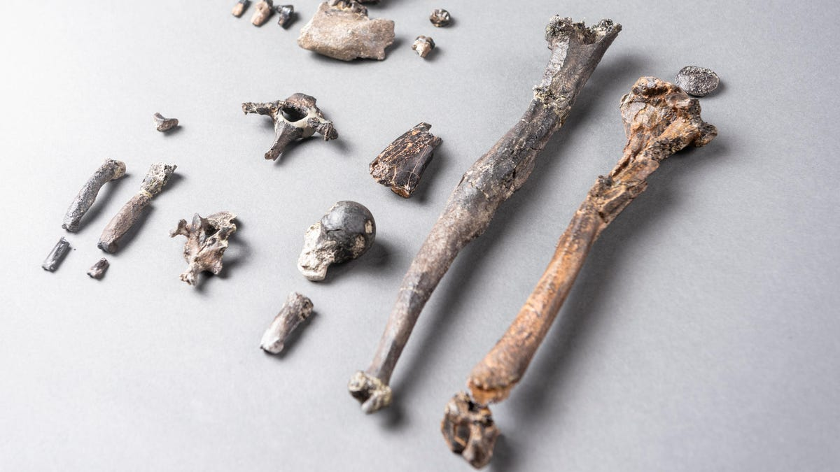 Ancient Apes May Have Learned to Walk Upright in the Trees