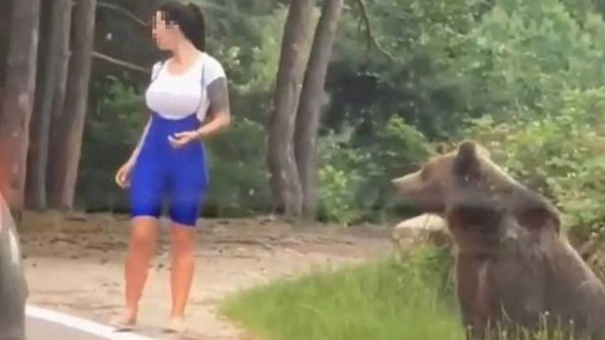 Detiene el auto para tomarse una foto con un oso salvaje. Sale mal