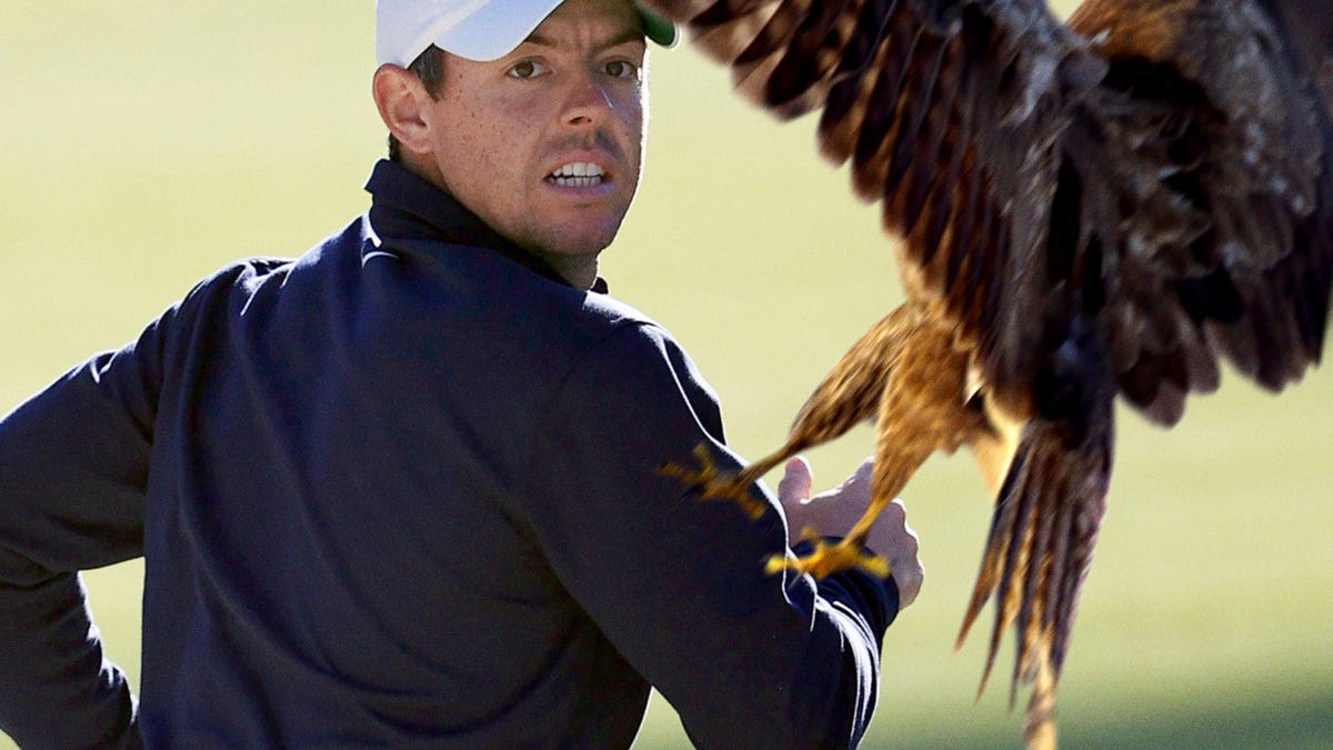 Rory McIlroy Attacked By Mother Hawk Protecting Golf Ball That Bounced Into Nest