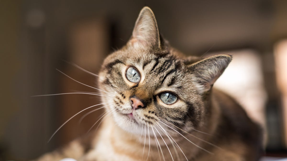 Aww: Animal Experts Are Saying Cats Really Do Miss Their Owners If That's What You Need To Hear