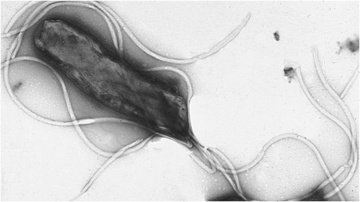 The Bacteria That Cause Stomach Ulcers Are Becoming Drug-Resistant, Too<i></i>