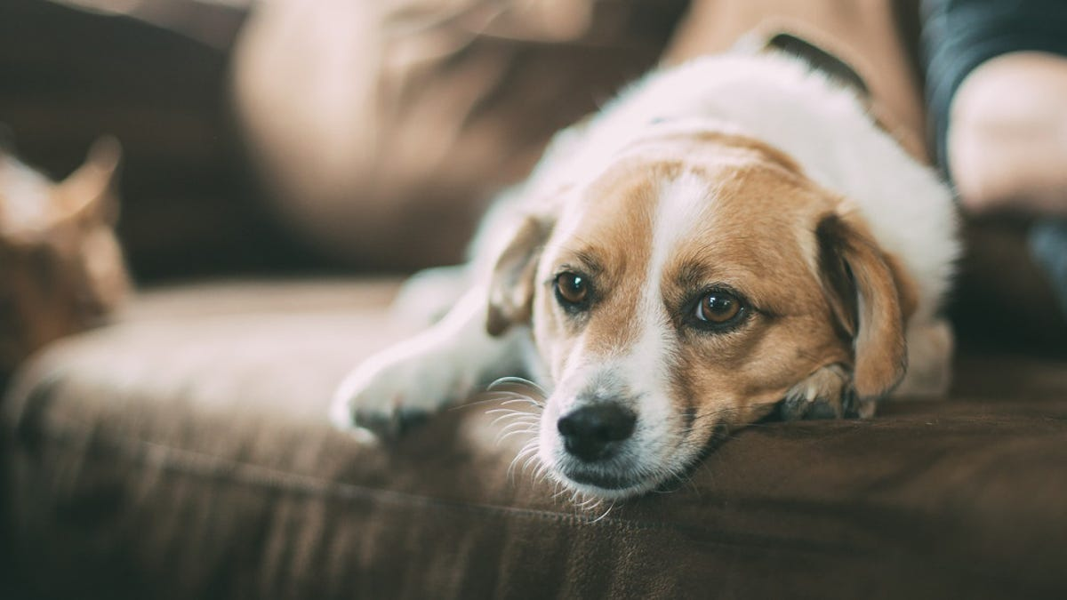 Your Dog Remembers All Those Awful Things You Did