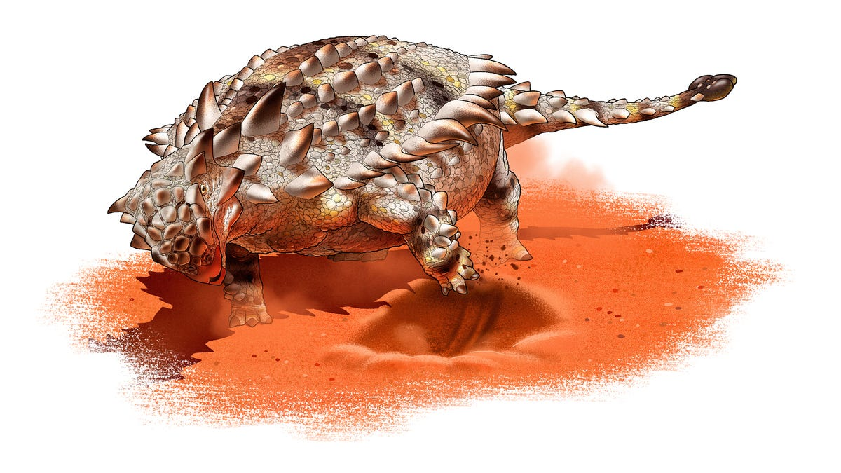 Armored Dinos May Have Dug Trenches to Protect Themselves, Fossil Study Suggests