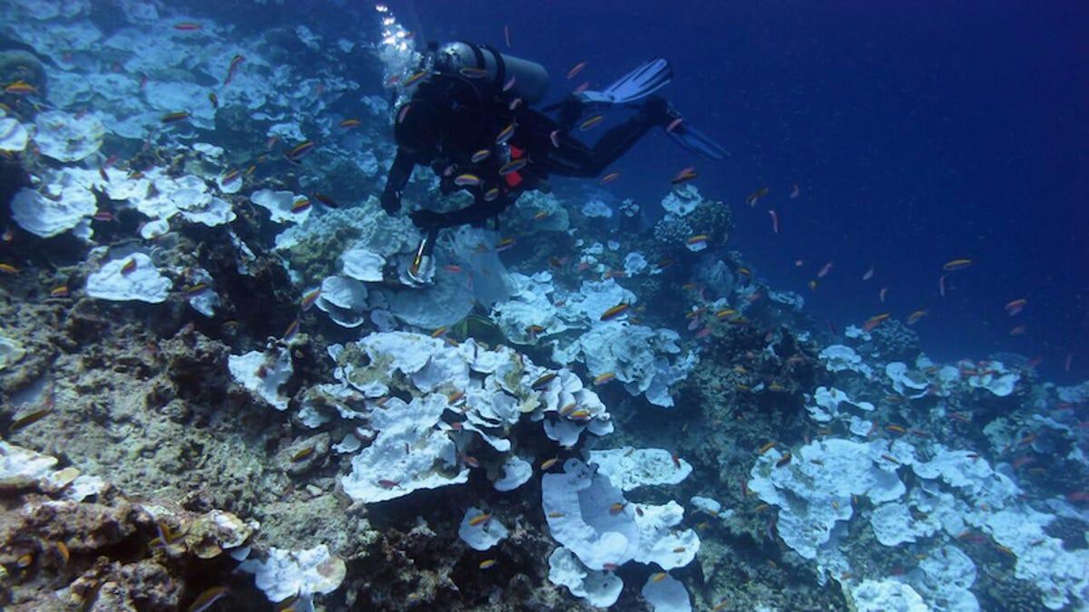 Poner altavoces al lado de los arrecifes de coral muertos ayuda a resucitarlos
