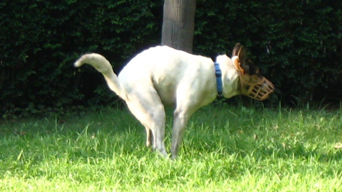 Los perros hacen caca alineados con el campo magnético de la Tierra, y otros hechos fascinantes difíciles de c