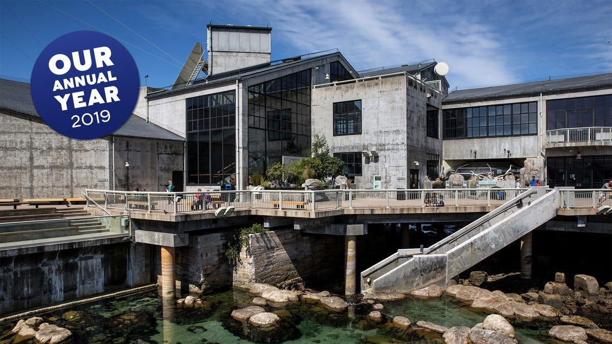 Unsere Eklatante Versuche, Schuhlöffel Eine Anekdote, Über Die Monterey Bay Aquarium In Einem Unabhängigen Gespräch In 2019