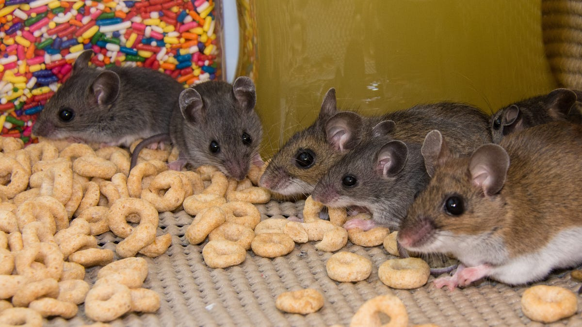 How to Get Rid of Mice Without Actually Killing Them