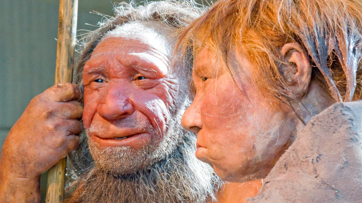 Neanderthals Didn't Use Their Thumbs Like We Do, New Research Suggests - Gizmodo