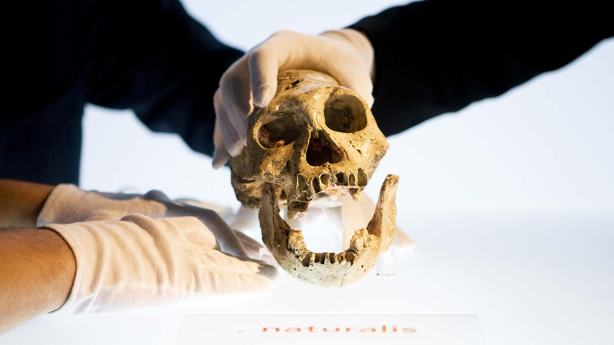 Early Humans Were Walking Around With Ape-Like Brains, Study Finds