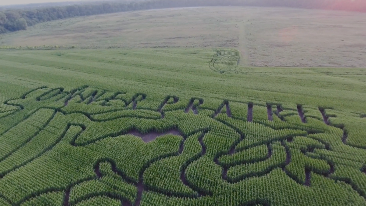 A Foolproof Guide To Escaping A Corn Maze