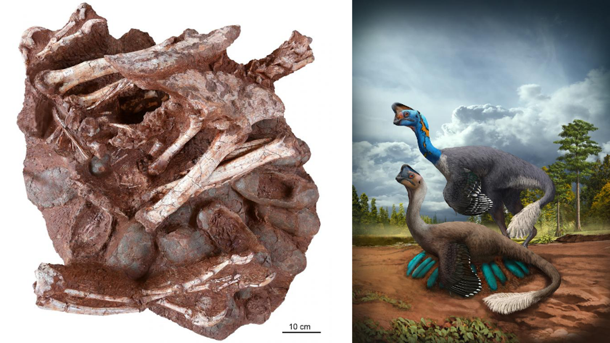 Extraordinary Fossil Captures Nesting Dinosaur and Unhatched Offspring