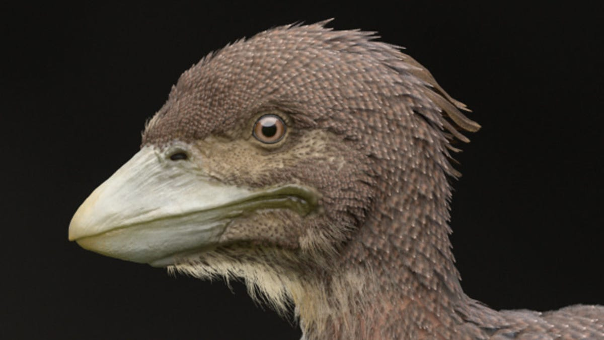 Stunning Fossil Discovery Uncovers the Second-Most Primitive Flying Bird